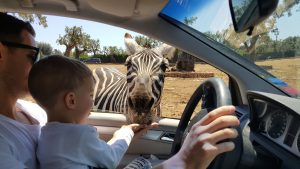 puglia-fasano-safari-zoo-bilingual-kidspot