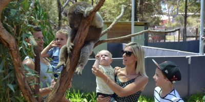 healesville-sanctuary-top-kids-melbourne-bilingual-kidspot-4