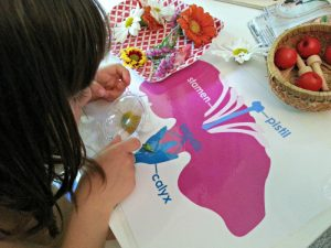 Montessori Activities - Bilingual Kidspot
