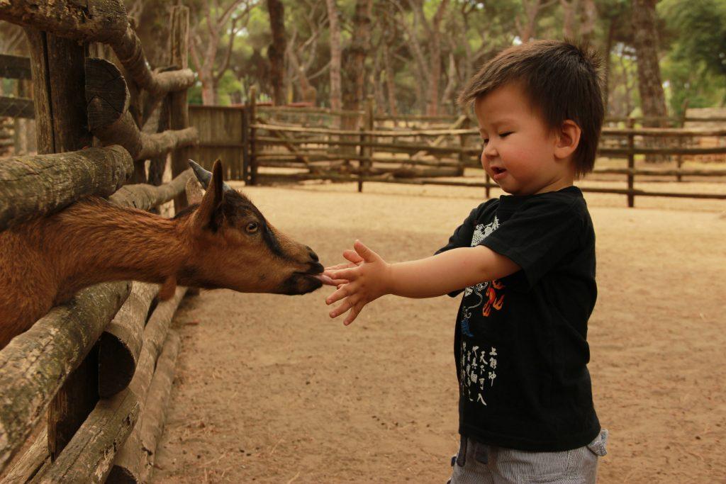 adoption china changing child's birth language - raising bilingual child