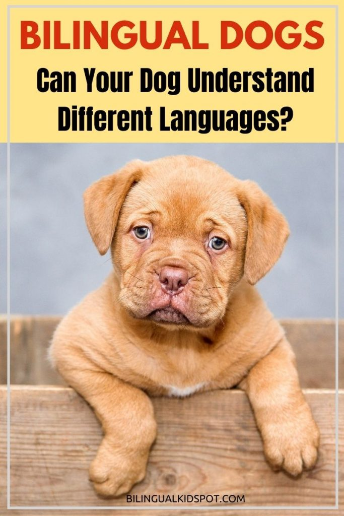 Bilingual Dogs What languages can dogs understand and speak